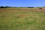 Die Landschaft auf Hiddesee ist noch sehr landwirtschaftlich geprägt.