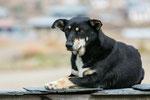 Straßenhunde sind in Bhutan sehr zahlreich.