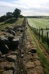 Der Hadrianswall liegt nahe Gilsland malerisch neben Schafweiden. Teilweise musste wir die Weiden sogar durchqueren um dem Wall weiter folgen zu konnen.