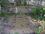 Tomatenbeet mit Grasmulch 24 verschiedene Pflanzensorten