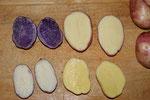 Violette schwedische(Lager)gelbe Waldviertler(Lager) weiße Waldviertler(Früh)Burgenländer dunkelgelbe (Lager)