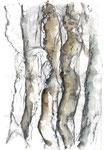 Baumfrauen