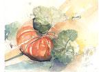 Kürbis, Herbst