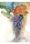 Obst, Trauben