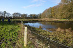 Teich zwei, der Uferbereich war vor zwei Stunden noch mit Weiden-Gestrüpp überwuchert.