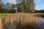Hier ist der dritte Teich abgebildet. Im Schilf befinden sich vereinzelt Weiden, die gezielt zurück geschnitten werden. Das Röhricht bleibt.