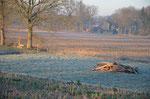 Da liegen sie in der Morgensonne und wollen noch verarbeitet werden ca. 130 Pfähle für den Zaunbau. Foto: Josef Taphorn