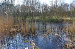 Hier werden wir uns heute noch betätigen, eine Ecke am Teich wird mit Sträuchern belassen, nicht alles wird herunter geschnitten. Foto: Josef Taphorn
