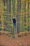 Welch prächtiger Wald mit herrlichen Farben. Foto: Josef Taphorn