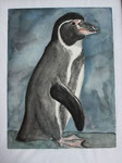 brillenpinguin (aquarell)