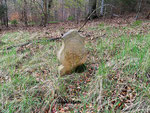 Der Jägerstein, Grabstele des Tod aufgefundenen Jägers des Schlossherrn