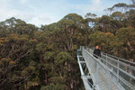 Tree Top Walk
