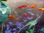 August - Christine Danninger - Tanzende Fische