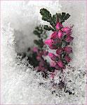 Dezember - Franz Moser - erster Schnee