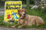 Juni - Gernot Wührleitner - Auf Beobachtungsposten