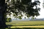 vue imprenable sur le vignoble gersois