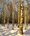 Березовый январь