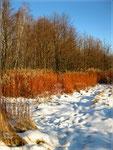 На зимнем солнце
