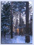 Закат за лесом