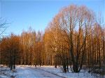 В зимнем парке (5)
