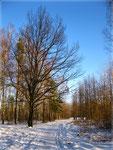 В зимнем парке (3)
