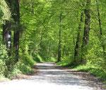 Anfahrtsweg zur Jugendburg