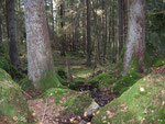 Verleskogen