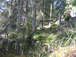 Orördhet präglar skogen