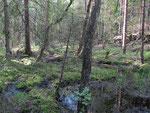 Sumpskog