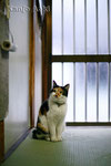 YASHICA ML1.7/50㎜ + EOS1Ds 2011.2.18
