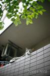 Caplio R1 自作レンズ + EOS1Ds    2011.7.4 ワイド+周辺光量落ちががgood!?