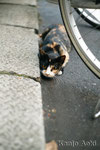 M42 PENTCON auto 1,8/50㎜ no.1 + EOS1Ds 昼間でも、猫は興奮すると瞳孔が開きます!!! 2010.9.14