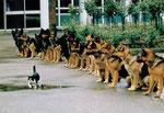 http://www.hundehomepage.de/helden/bilder/courage.jpg