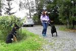 sogar wenn andere Hunde vorbeikommen (klappt super)!