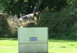 Dakota mit viel Luft, 160cm wären wohl kein Problem!