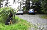 Auch ohne Sichtkontakt zu Herrchen sollte der Hund ruhig warten
