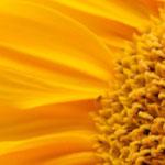 Bienenland