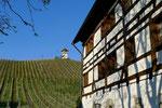 Weinberg hinter dem Weingut Haltnau