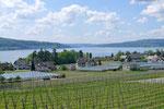 Wein- und Gemüsebau, Bodensee