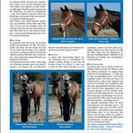SSH EUW-Report 3