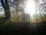 Wotan im Wald