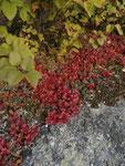アラスカの植物