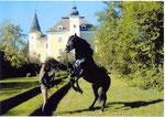 """""""Brioso"""", der bildschöne Andalusierhengst von Tina Trögl, durfte bei der Verfilmung meines Buches """"Hengstparade"""" mitspielen."""