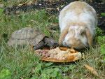 Eingesperrte Tiere sind mir ein Gräuel. Kaninchen springen sehr hoch, Landschildkröten laufen gern - und sogar schnell. Sie stellen die Beine hoch und ab geht die Post.