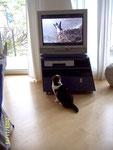 Vögel sind auch auf dem Bildschirm interessant ... Georgy liebte Tierfilme