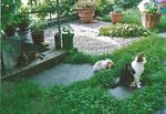 Katzen, Kaninchen, Schildkröten, Buntratten - alle sind frei und kommen miteinander klar.