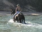 Reitersafari in Mozambique bei Mandy und Patrick - gepflegte Pferde, hervorragende Gastgeber.