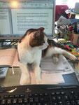 Georgy hat mnich keine Nacht alleine arbeiten lassen - immer lag er neben meiner Tastatur auf dem Schreibtisch.
