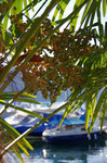 ...Palmen am Vierwaldtstätter See