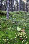 Märchenwald....